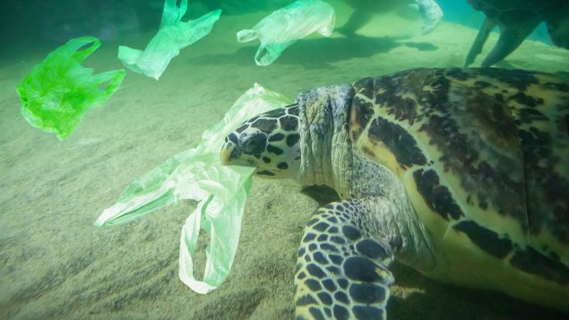 Panamá Primer País Latinoamericano En Prohibir Las Bolsas De Plástico